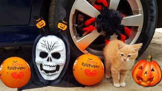 Crushing Crunchy & Soft Things by Car! - EXPERIMENTS : HALLOWEEN TOYS AND BABY CAT VS CAR TEST