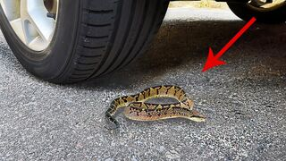 Experiment: Car vs Snake toy! Crushing Crunchy & Soft Things by Car - Satisfying ASMR Video