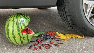 Experiment Car vs Watermelon vs Insect Bug Toy   Crushing Crunchy & Soft Things by Car   Car US