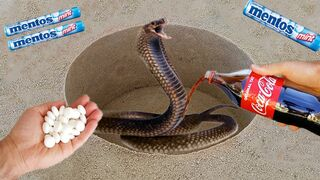 Coca Cola, Different Fanta, Mtn Dew, Pepsi,Sprite and Stretch toy Snake vs Mentos in Big Understand