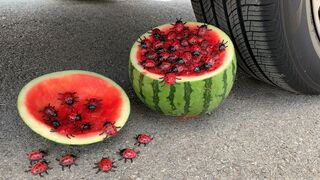 Experiment Car vs Watermelon vs Insect and Bug Toy | Crushing Crunchy & Soft Things by Car | Test Ex