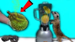 TRYING DURIAN COCKTAIL! THE SMELLIEST FRUIT IN THE WORLD!