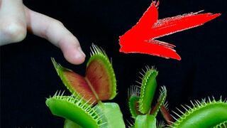 What if I put my Finger in a Venus Fly Traps?!?