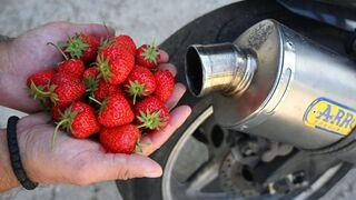 EXPERIMENT Strawberries in MOTORCYCLE EXHAUST
