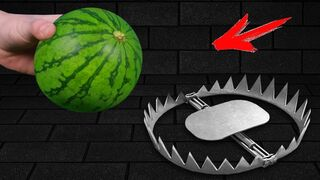 Experiment: Trap VS Watermelon