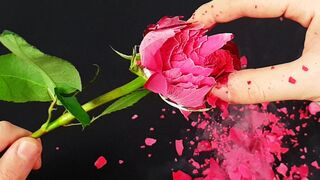 Experiment: Liquid Nitrogen Vs Flower