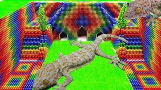 ASMR - Build Underground Tunnel For Gecko With Magnetic Balls (Satisfying) - WOW Magnet